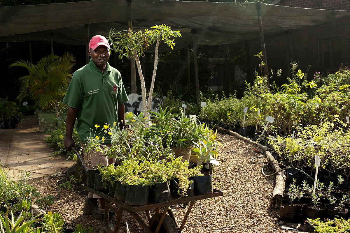 hact biz our-social-enterprises-hillaids-Hillcrest-aids-centre-trust-hact-plant-nursery